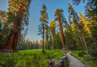 Plakat Sequoia National Park, Kalifornia