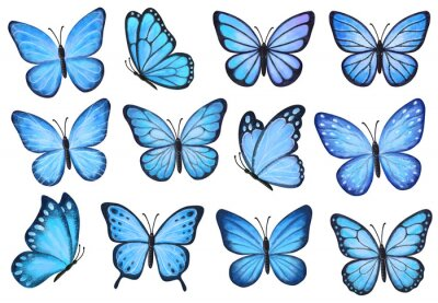 Plakat Set of blue butterflies isolated on white background. Watercolor. Illustration. Template, blue  butterfly spring illustration.