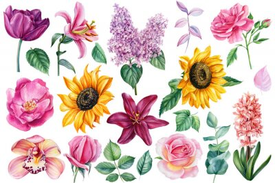 Plakat Set of bright flowers on an isolated white background, botanical elements for design, watercolor painting