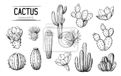 Plakat Set of cacti with flowers. Hand drawn illustration converted to vector