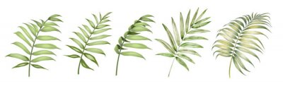 Plakat Set of differents palm leaves on white background. Watercolor, line art, outline illustration.