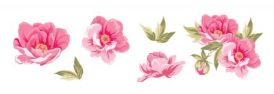 Plakat Set of differents peonies on white background.