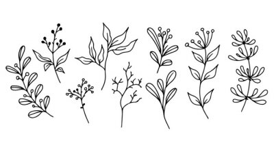 Plakat Set of hand-drawn floral elements,doodle plants and branches on a white background. Sketchy elements of design. Vector doodle illustrations.