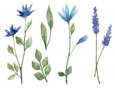 Plakat Set of hand painted watercolor blue flowers. Botanical illustration