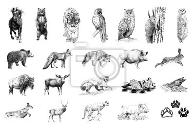 Plakat Set of many animals and foot prints