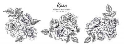Plakat Set of rose flower and leaf drawing illustration on white backgrounds.