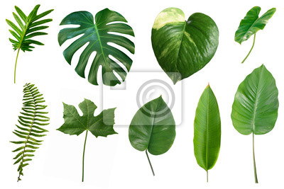 Plakat Set of tropical green leaves isolated on white background.