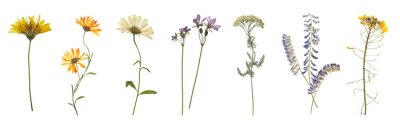 Plakat Set with beautiful dried meadow flowers on white background. Banner design