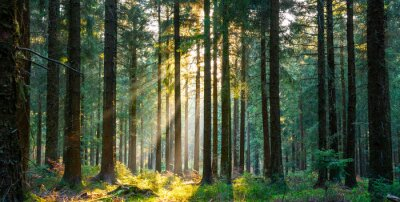 Plakat Silent Forest in spring with beautiful bright sun rays