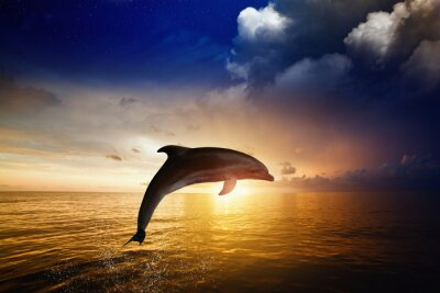 Plakat Skoki delfinów