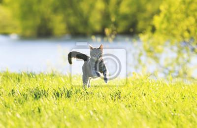 Plakat Słodka kota zabawa biegnie na zielonej łące w słoneczny letni dzień