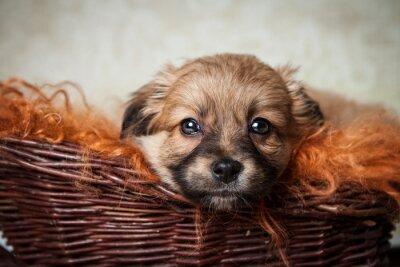 Plakat słodkie pies