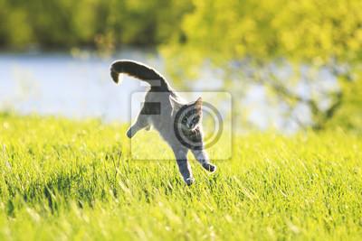 Plakat Słodkie tabby kota zabawa działa na zielonej łące w słoneczny dzień