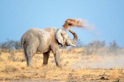 Plakat Słoń afrykański w pył, Park Narodowy Etosha