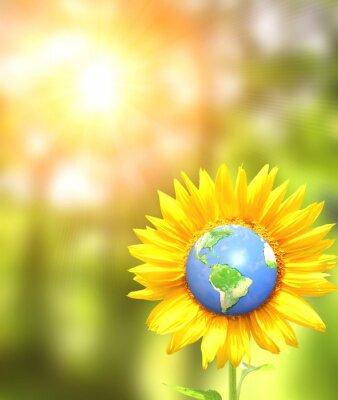 Słonecznik i Ziemi na tle sunny