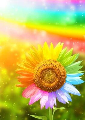 Plakat Słonecznik malowane w różnych kolorach