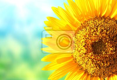 Słoneczniki na zamazanym pogodnym tle