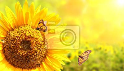Słonecznikowi i monarchiczni motyle na zamazanym pogodnym tle