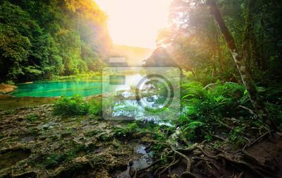 Słoneczny poranek w górskiej dżungli Parku Narodowego Sem