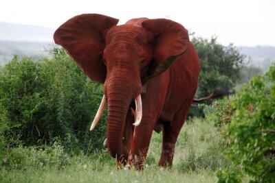 Plakat słoni w Parku Narodowym Tsavo East