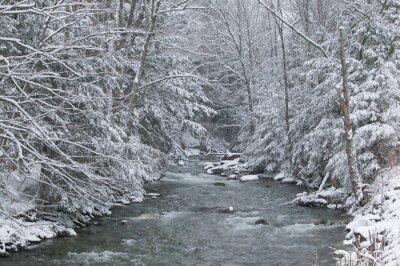 Plakat Śnieg pokryte sosny na brzegu rzeki w zimie.