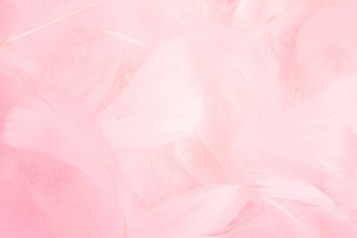 Plakat Soft pink feathers background