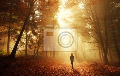 Plakat Spacer w lesie z oszałamiający efekt oświetlenia we mgle
