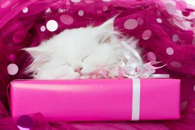 Plakat spanie Kitty