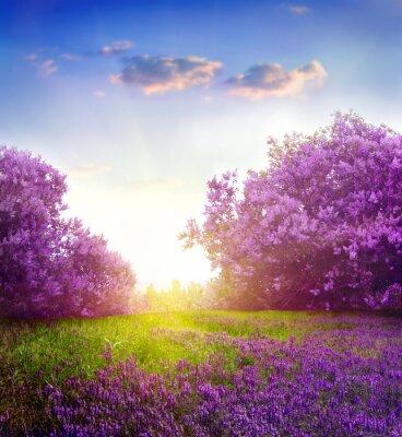 Plakat spring landscape