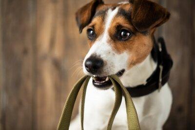 Plakat Sprytny pies czeka na spacer