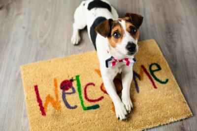 Plakat Sprytny pies pozowanie na dywanie