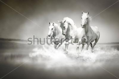 Plakat Stadia białych koni biegnących przez wodę