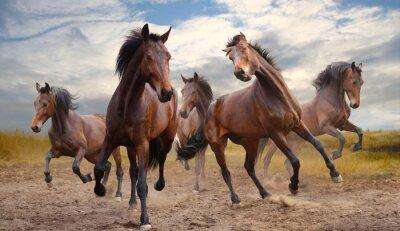 Plakat stado koni