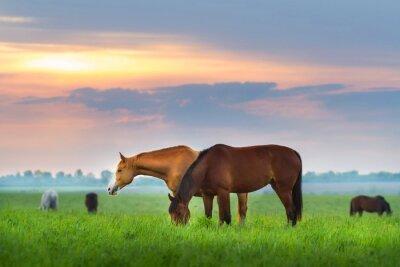 Plakat Stado koni na pastwisku na Sunrize