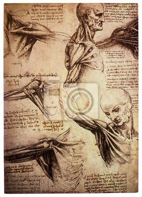 Plakat Stare anamtomical rysunki Leonarda Da Vinci