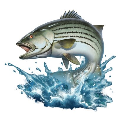 Plakat Striped bass jumping out of the water illustration isolate realism. Striped perch on the background of splashing water.