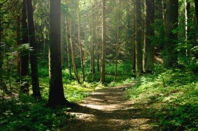 Plakat Summer sunny forest
