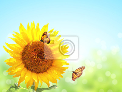 Sunflowers and two butterflies on blurred sunny background