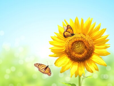Plakat Sunflowers and two butterflies on blurred sunny background