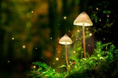 Plakat Świecące lampy grzybowe z świetlikami w magicznym lesie