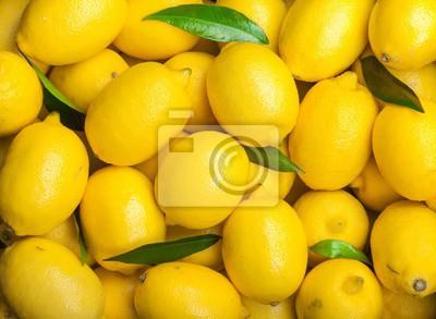 Plakat Świeża żółta cytryna