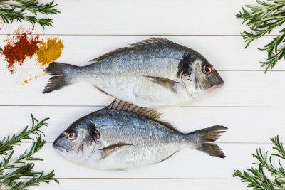 Plakat Świeże surowe ryby dorado na białym drewnianym stole z rozmarynem. Widok z góry