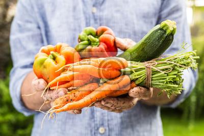 Plakat Świeże warzywa w mokrych rąk ogrodnika - wiosna