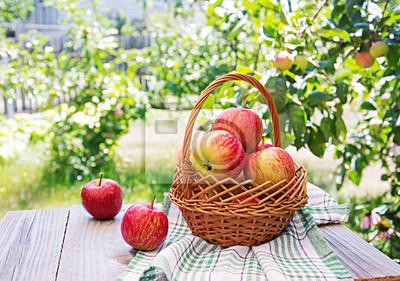 Świezi czerwoni jabłka w koszu na stole w lecie uprawiają ogródek