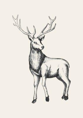 Plakat Szkic ilustracji z reniferów