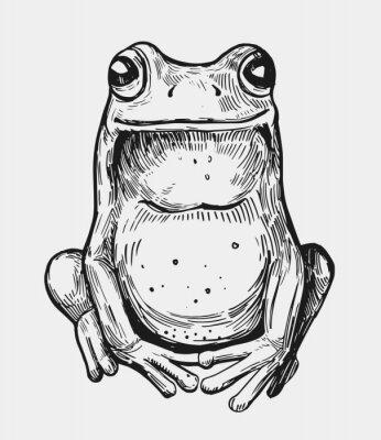 Plakat Szkic żaby Ręcznie rysowane ilustracji. Wektor. Odosobniony