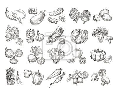 Plakat Szkicuj warzywa. Kolekcja ręcznie rysowane warzyw ogród. Marchewki brokuły sałatka ziemniaczana pieczarka hodowli wektor zestaw. Sałatka i marchewka, nakreślenie pieczarkowa ilustracja