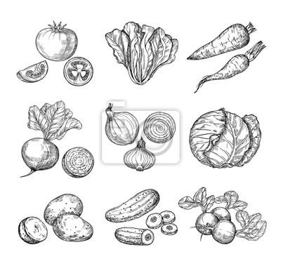 Plakat Szkicuj warzywa. Świeży pomidor, ogórek i marchewka, ziemniaki. Ręcznie rysowane cebula, rzodkiewka i kapusta. Ogrodowy jarzynowy wektor ustawiający pomidor i grula, organicznie świeżej żywności ilust