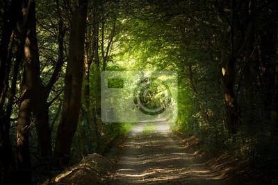 Plakat tajemnicza ścieżka w lesie