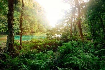 Plakat Tajemniczy Mayan dżungli w parku narodowym Semuc Champey Guate